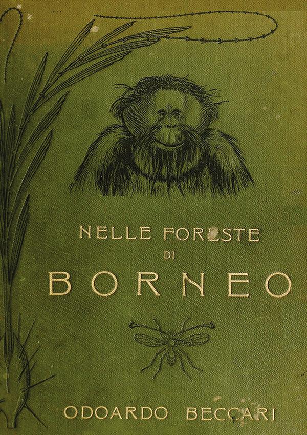 Nelle foreste di Borneo